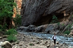 narrows7